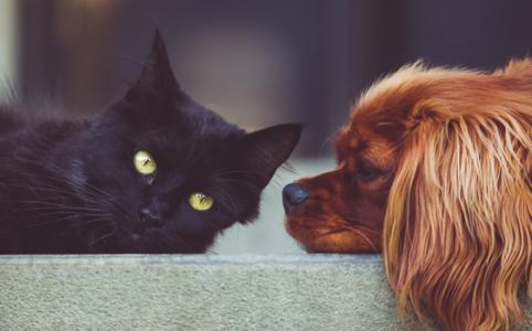 ペット同士が見つめあうシーン