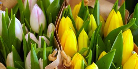 3月のチューリップの花束